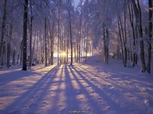 winter-nature-photography-widescreen-hd-1024x768